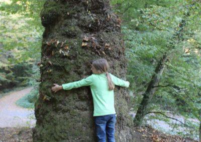 wie alt ist der Baum wohl